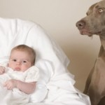 Keeping Your New Born Safe with Pets in the Home